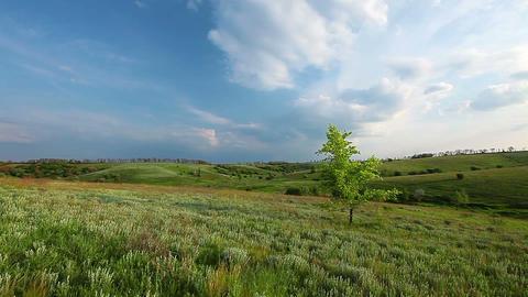 spring landscape. evening Stock Video Footage