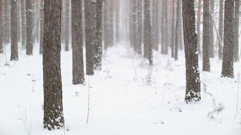 Falling Snow in Winter Footage
