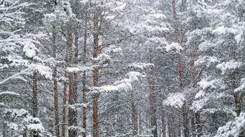 Falling Snow in Winter Stock Video Footage
