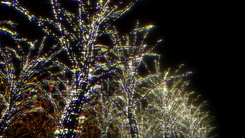 illumination tree neon B 1 HD Stock Video Footage