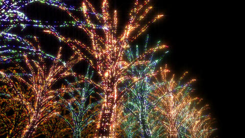 illumination tree neon B 2 HD Stock Video Footage