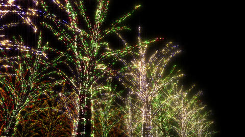 illumination tree neon B 2 HD Stock Video Footage