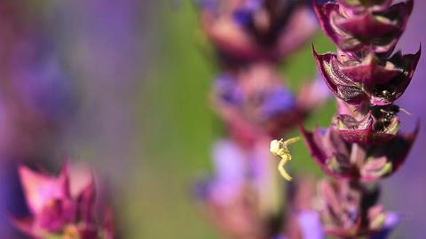 spring flowers Stock Video Footage