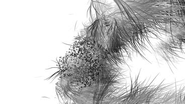 Bacterial spores microbial growth,abstract line art... Stock Video Footage