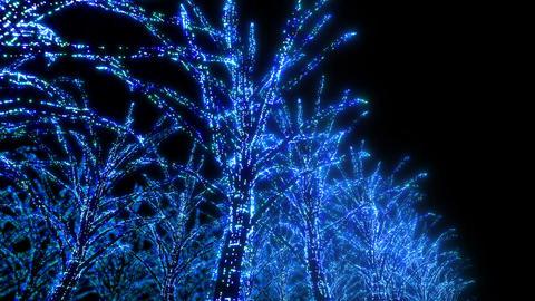 illumination tree neon B 3 HD Stock Video Footage