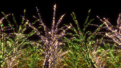 illumination tree neon C 2 HD Stock Video Footage