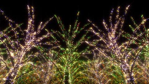 illumination tree neon C 2 HD Stock Video Footage