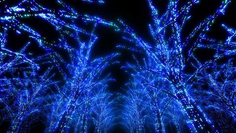 illumination tree neon Dd 3 HD Stock Video Footage