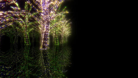 illumination tree neon Hh 2 HD Stock Video Footage