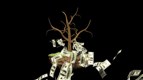 Growing Investment Tree with Alpha Stock Video Footage