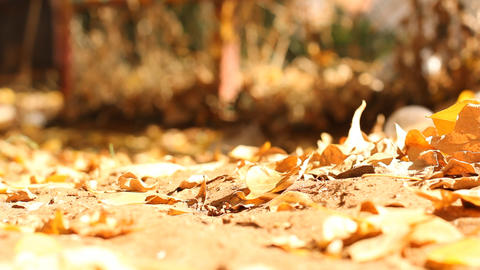 Autumn Yellow, orange and red leaves in beautiful Footage