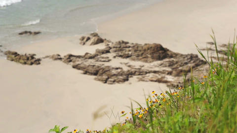 Beach Flowers Scenic Dolly Stock Video Footage