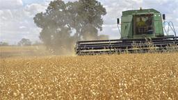 Harvest 02 HD Stock Video Footage