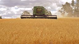 Harvest 04 HD Stock Video Footage
