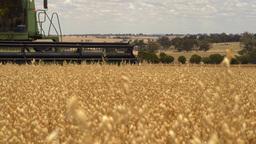 Header harvesting a crop of oats on an Australian Stock Video Footage