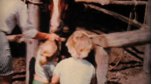 Kids Feeding A Pony At The Farm 1962 Vintage 8mm Stock Video Footage