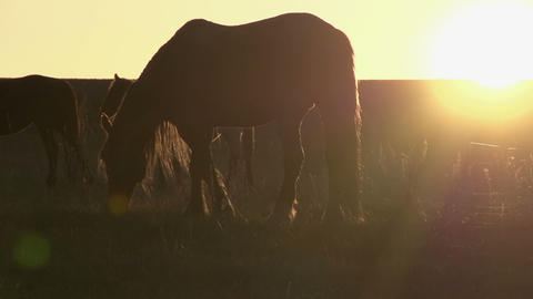 Evening pasture HD Stock Video Footage