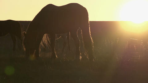 Evening pasture HD Footage