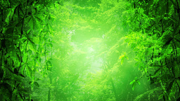 Green Paradise Stock Video Footage