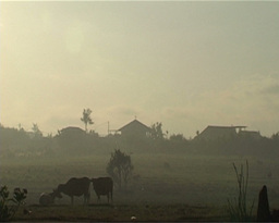 Rural Scenery Of Bali stock footage