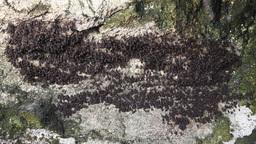 Bats on Rock Footage