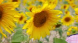 Boy in Sunflower Field Footage