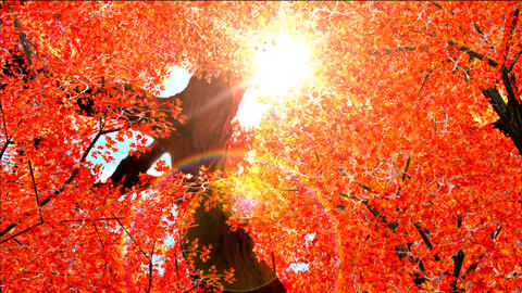 Autumn red leaves falling in wind Stock Video Footage