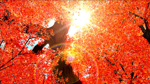 Autumn red leaves falling in wind Animation