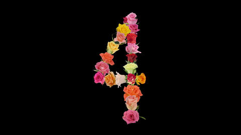 Montage opening rainbow roses number 4 shape alpha matte 4n Stock Video Footage