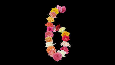 Montage opening rainbow roses number 6 shape alpha matte 6n Stock Video Footage