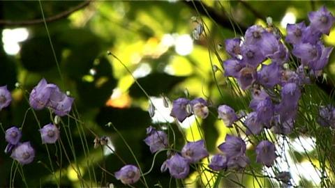 ntsc flowers closeup Stock Video Footage