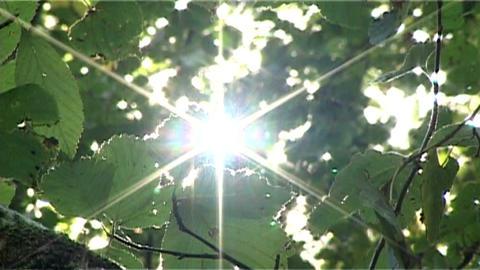 ntsc natural shining closeup Stock Video Footage
