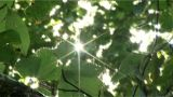 Ntsc  Natural Shining Closeup stock footage