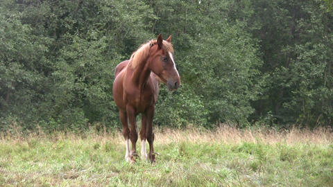 Horse in a pasture 1 Stock Video Footage