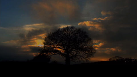 SilhouetteTree Mist ColourfulTimelapse Stock Video Footage