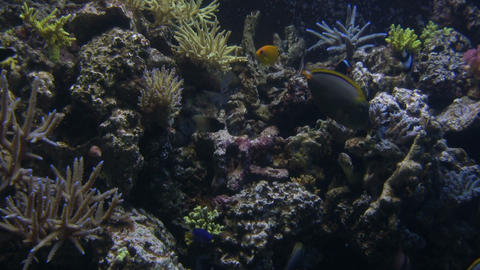 Lots of fish are swimming around the aquarium Stock Video Footage