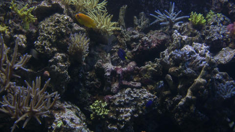 Lots of fish are swimming around the aquarium Footage