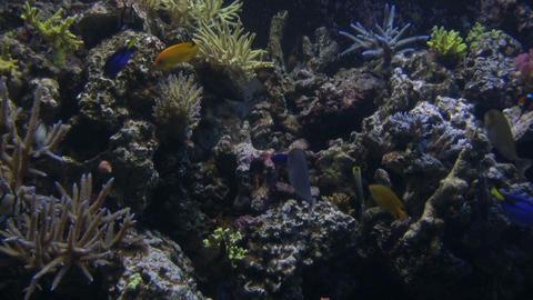 Lots of fish are swimming around the aquarium Stock Video Footage