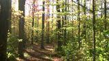 Beautiful autumn scenic of the fall foliage (High... Stock Video Footage