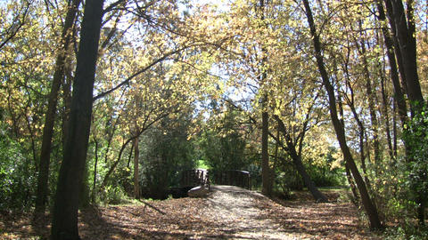 Beautiful autumn scenic of a sunny walking trail (High Definition) Footage