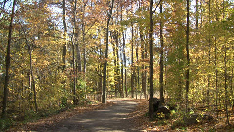 Beautiful autumn scenic of a sunny walking trail (High... Stock Video Footage