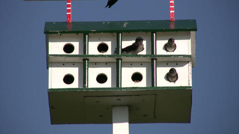 Birds are hanging out in bird feeder hotel (High Definition) Stock Video Footage