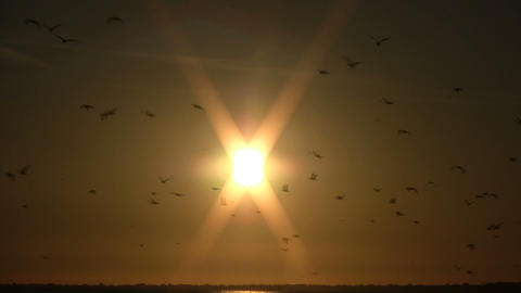 Flock of birds are shilouetted against the sun (High Definition) Footage