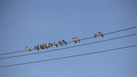 Birds Sitting on a Wire 4 (High Definition) Footage