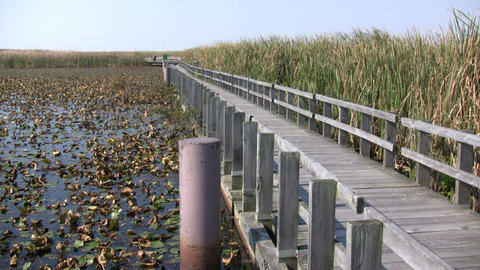 Boardwalk winds it way through the Canadian wetlands (High Definition) Footage