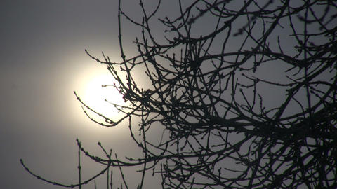 Branches gently sway against the winter sun (High... Stock Video Footage
