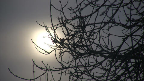 Branches gently sway against the winter sun (High Definition) Footage