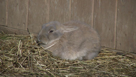 Bunny 01A (High Definition) Stock Video Footage