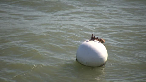 Buoy bobs in ocean on a sunny day (High Definition) Footage