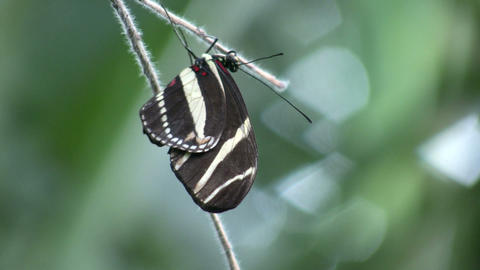 Butterfly resting on a branch (High Definition) Footage